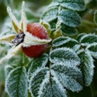 В начале июня в Омск нагрянут заморозки