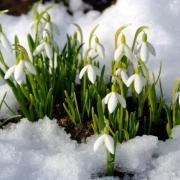 Омичи отметят 8 марта хорошей погодой
