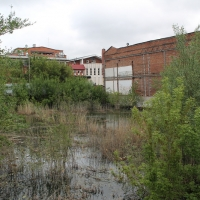 В центре Омска появилось болото