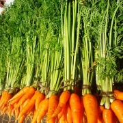 В Омске запущен новый завод по мытью и фасовке овощей
