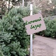 В Омске открылось 113 ёлочных базаров