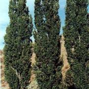 Омичи выберут символическое дерево региона