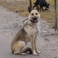 """Омский приют для собак """"Друг"""" могут лишить 16 вольеров"""