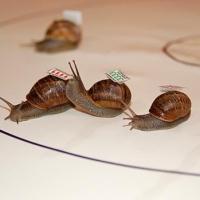 Омичи увидят спринтерский забег улиток и черепах