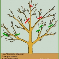 Виды обрезки деревьев