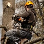 В Омске готовят к вырубке больше тысячи деревьев