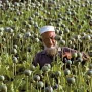 В Омске соберут знатоков афганского опия