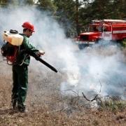 Арендаторам омских лесов разрешили не тушить пожары