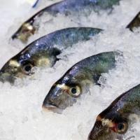 """Замороженная рыба от компании """"Маридель"""""""