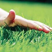 Где можно купить семена газонных трав