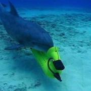 Крымские боевые дельфины перейдут в российскую армию