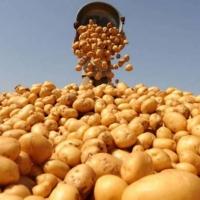 Меры необходимые для получения богатого урожая картофеля