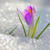 Омские синоптики пообещали тёплый март