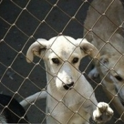 Пункт содержания собак на Барабинской готов расторгнуть контракт с мэрией