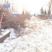 Омичи выступили против вырубки 100 деревьев на Валиханова