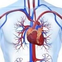 Диагностика состояния сердечно-сосудистой системы