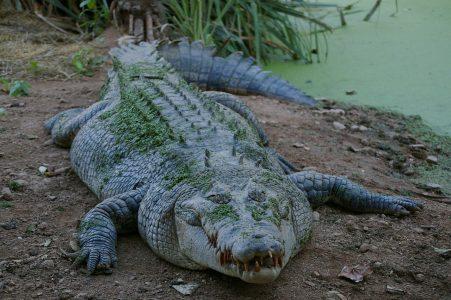 Лидер омской «Справедливой России» сравнил «ЕР» с крокодилом