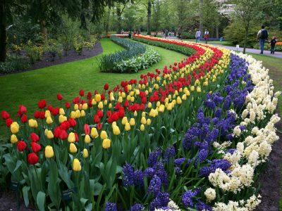 К 9 мая Омск превратят в цветущий сад