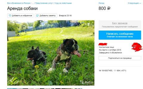 Россияне сдают собак в аренду для выхода из дома в период самоизоляции