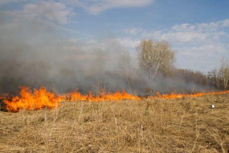 В Омске несколько дней горел остров посередине Иртыша