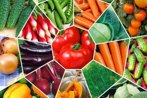 Как сэкономить на покупке семян