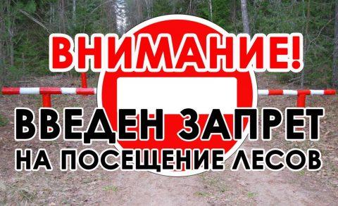 Омичам запретили посещать леса до 29 мая