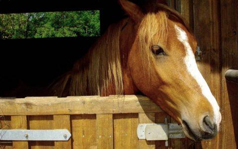 В Омской области объявлен карантин из-за обнаруженной инфекционной анемии у лошадей