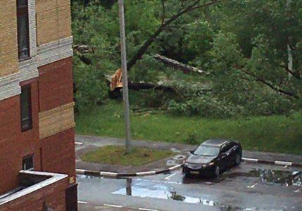 Вчерашний шквал в Омске повалил деревья, усиление ветра ожидается 21 мая.