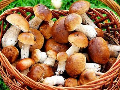 В Омске уже пошли грибы из-за аномально теплой погоды