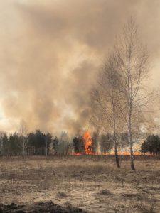 В Омской области с возвращением теплой погоды вернулись лесные пожары
