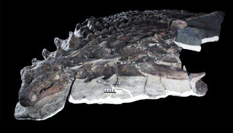 Ученые рассказали, чем сотню миллионов лет назад питался динозавр
