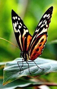 Биологи: уникальное строение крыльев бабочки спасает их от дождя и грозы