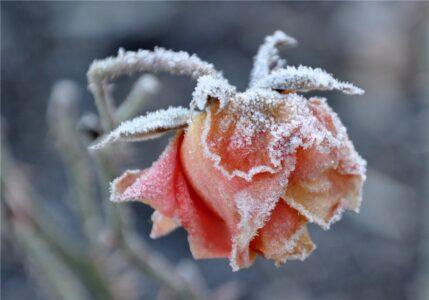 Омичей предупреждают о ночных заморозках до - 5°С