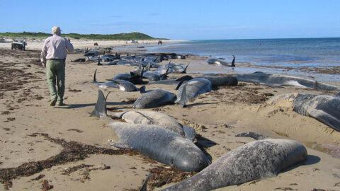 Человечество может затронуть шестое глобальное вымирание