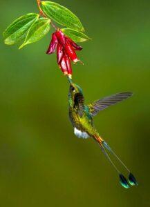 Цвета, недоступные зрению человека,  способны видеть колибри