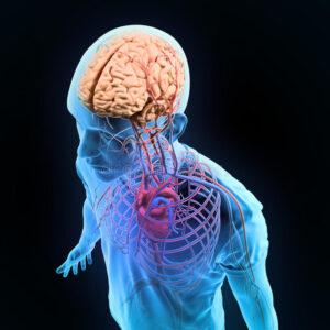 """Собственный маленький """"мозг"""" найден у сердца"""