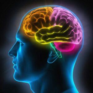 Ученые: выявлена доля мозга, которая отвечает за распознавание лиц и мест