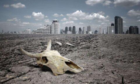 Что будет с Землей, если человечество вымрет, рассказали ученые