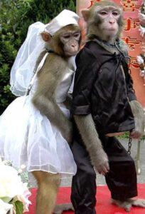 У обезьян и американцев схожий тип мышления обнаружили ученые
