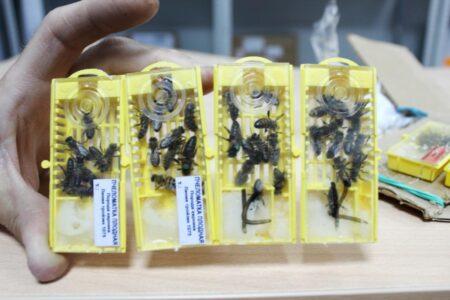 Жители Омска отправляют пчел, мотоциклы и саженцы по почте