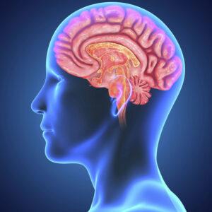 Рефлексотерапевт: как улучшить работу мозга без лекарств