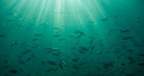 В Омске из Иртыша украли воду вместе с рыбами