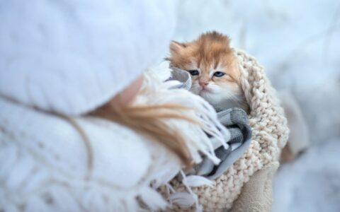 В Омской области мужчина расстрелял котенка на глазах у детей