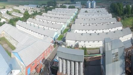 Поголовье омской птицефабрики полностью уничтожат