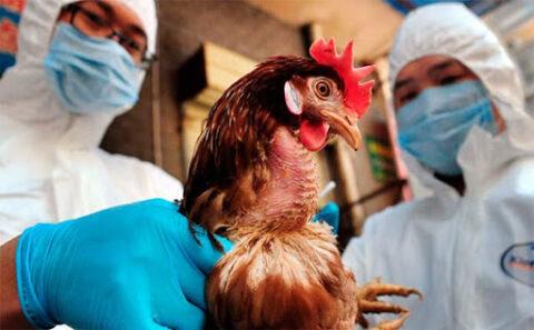 В Омской области зарегистрирована вспышка птичьего гриппа