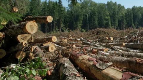 Канал контрабанды древесины перекрыли в Омской области