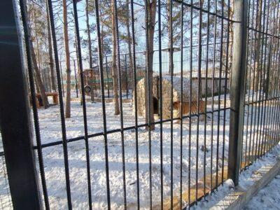 В Большереченском зоопарке Омской области у амурских тигров появилась новая жилплощадь