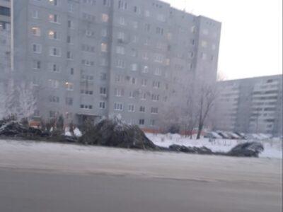 В омских Нефтяниках ликвидировали брошенный елочный базар