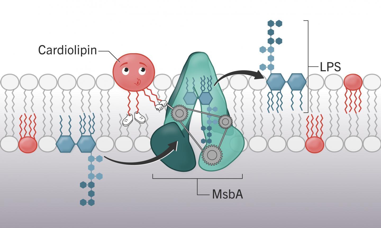 Американские ученые разработали способ борьбы с супербактериями