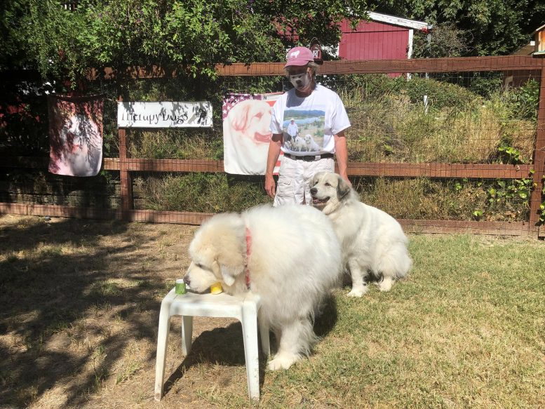 Собаки по запаху могут точно идентифицировать людей, инфицированных COVID-19